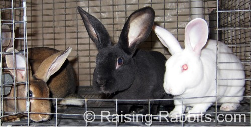 Young rabbits eat and eat, only slowing down at around 5 months of age.