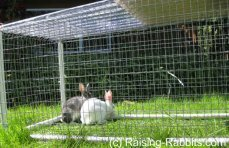 Secure yet portable rabbit run
