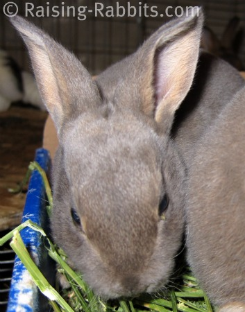 Carefresh blends control pet ammonia buildup better