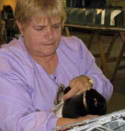 Rabbit judge checks toenail color on black otter mini-rex rabbit