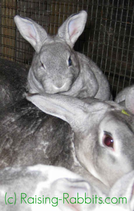 4-week-old rabbit kits are positively thriving
