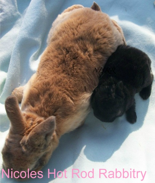 Binky the peanut and its normal-sized littermate.