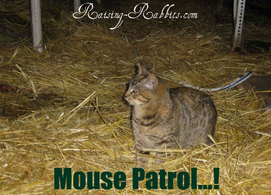 One of the barn cats at Aurora Rex Rabbit Ranch