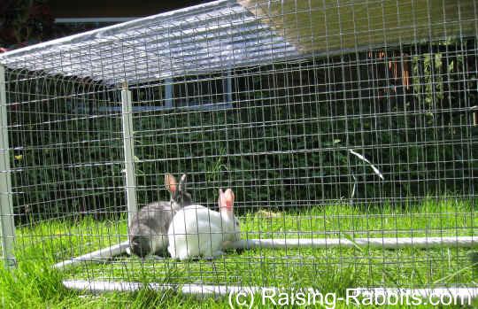 Secure yet portable rabbit run