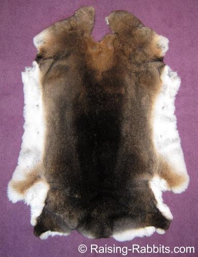 Castor Rex Rabbit Pelt