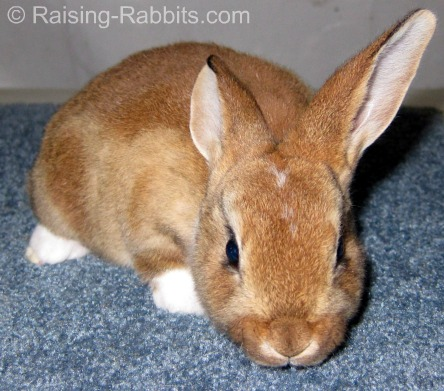 A bunny's immune system needs to be fully functioning - by age 6-7 weeks, before administering a vaccine.