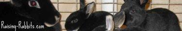 Black Otter Rex Doe and bunnies