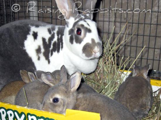 4 week old baby rabbits