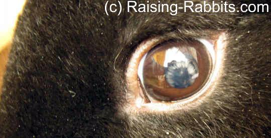 Developing autosomal recessive disorder - juvenile cataracts