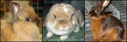 Pet Rabbits and Pet Rabbit Care, Bedding, Toys, etc.