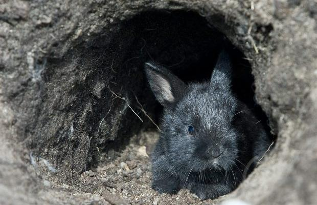 How to tear up the countryside - release rabbits into the wild!
