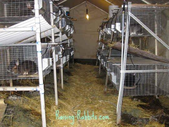 Aurora Rex Rabbit House - the