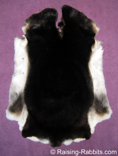 Black Otter Rex Rabbit Pelt