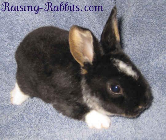 Cutest little pet rabbit ever