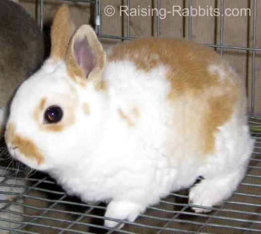 4 week old baby rabbit