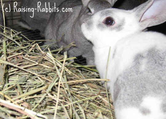 Give grass hay for mild rabbit diarrhea