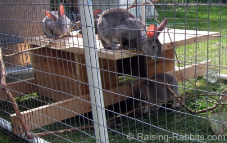 Extra large covered PVC and wire rabbit run
