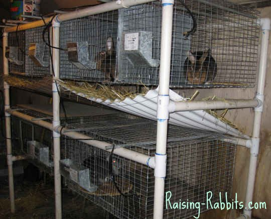 Rabbits can be an important part of survival preparedness