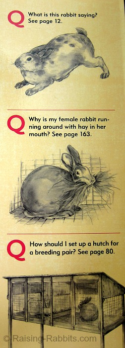 Sample questions and illustrations on the back cover of the Rabbit Raising Problem Solver, by Karen Patry