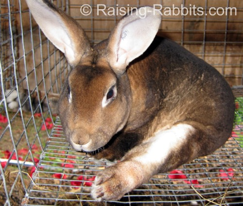 Symptoms of Spinal Injury in Rabbits  Rabbit with back broken