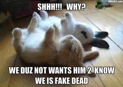 Meme about 2 hypnotized little bunnies