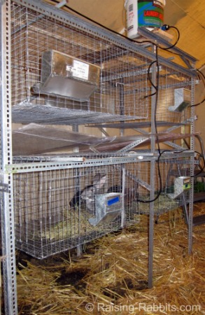 All-wire rabbit cages suspended from angle iron hutch frame