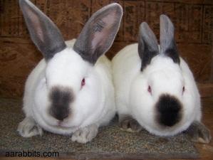 Rabbit Rhythm 033 Raising Rabbits 3 Years Old Bonus