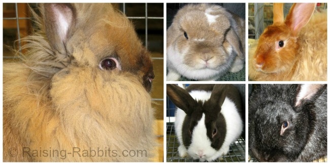 48 breeds of rabbits in the USA are products of selective breeding, enhancing the qualities of each breed