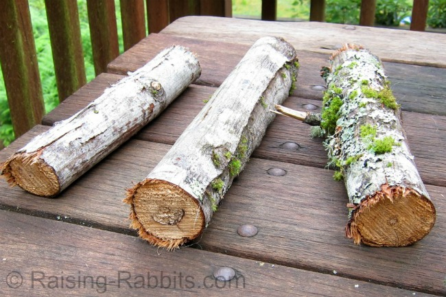 Branches for rabbits to chew