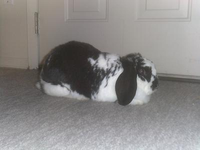 My rabbit Thumper. Quite a handsome chap, don't you think?