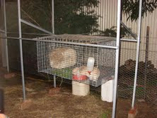 Cage racks inspired by your pvc rabbit hutch plans for Pvc rabbit cage