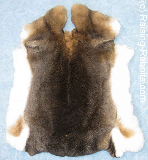 Castor Rex rabbit pelt, tanned