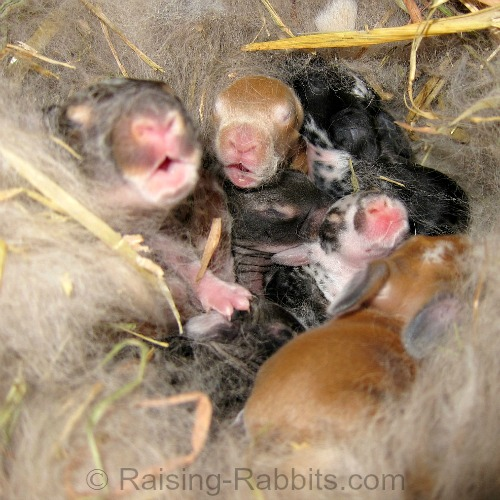 This days old litter thinks mom has arrived to feed them!