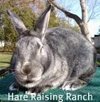 BIS Chin Satin at Hare Raising Ranch