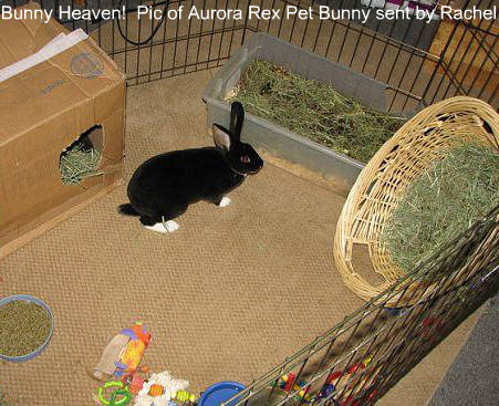 This is Hermes, a pet rabbit with all it could need