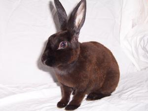 Our new bunny to be - a rescue rabbit.