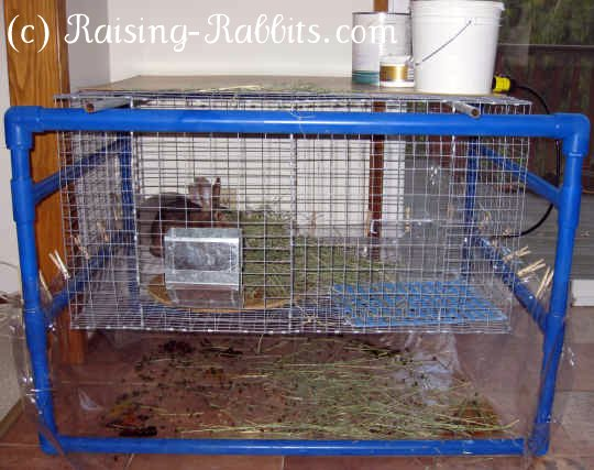 2 pet rabbits in large indoor rabbit cage with blue PVC indoor hutch frame