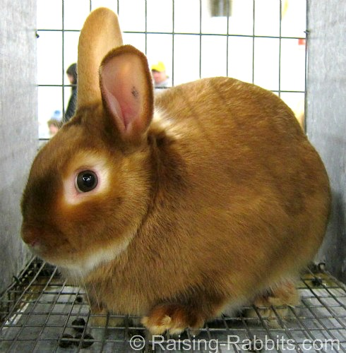 Red Mini Satin Rabbit