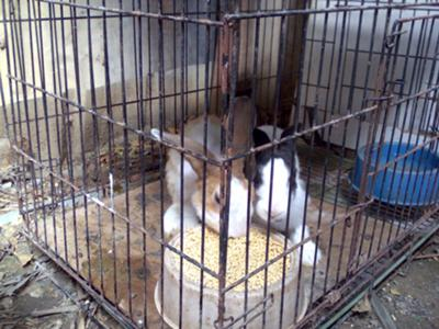 My Rabbits