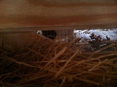 Nest box with lid raised