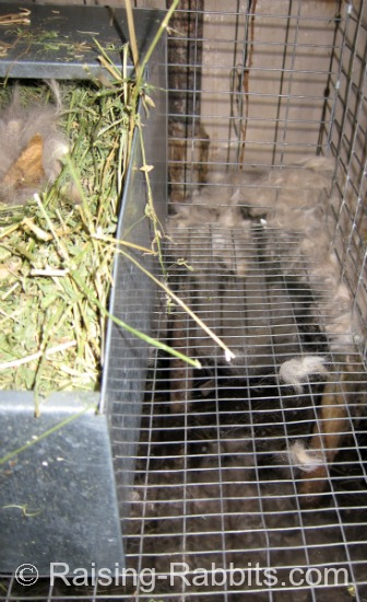 Rabbit is trying to build her nest outside her nest box, and the fur is falling through to the ground beneath the cage