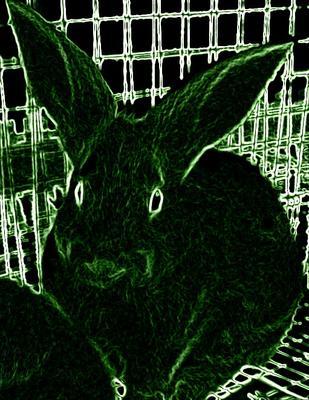 B2B Rabbitry
