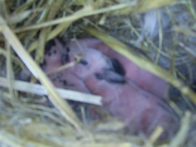 Babies at 3 days old