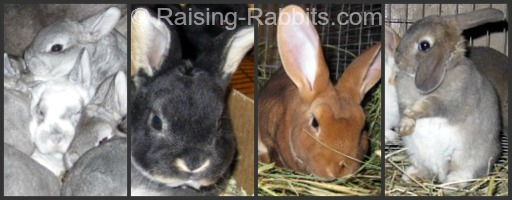 Several varieties of Rex Rabbits from Aurora Rex Rabbit Ranch