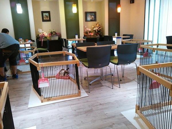 Japanese pet rabbit cafe