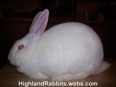 Rabbitry Raising New Zealand Rabbits