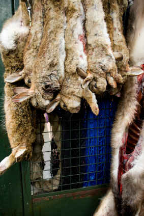 Rabbits for sale hanging in butcher shop