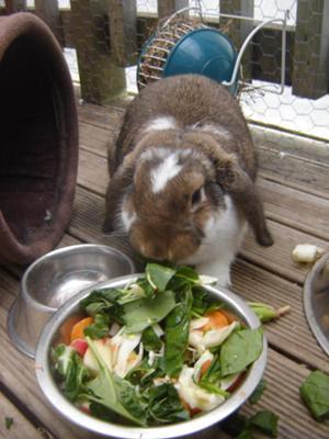 Robbie Rabbit 'free-ranging' on the deck