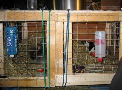 Their indoor housing, buck on the left & does on the right (wooden divider in between)