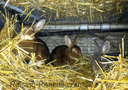 Straw-insulated cage
